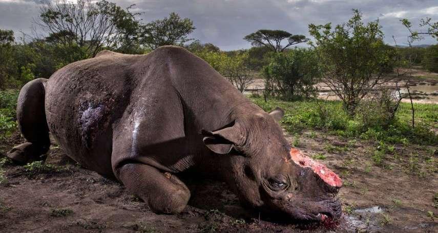 「失去對人性的信心」拍下被砍犀牛瀕死掙扎 南非攝影師奪英國野生動物攝影獎