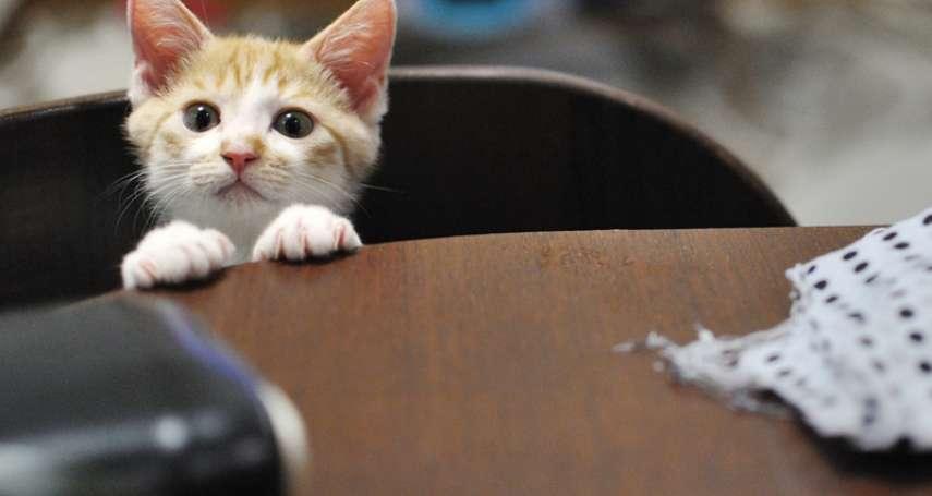 在公司養貓可以增進工作效率和溝通效果?一間日本公司這樣做,讓貓奴超羨慕!