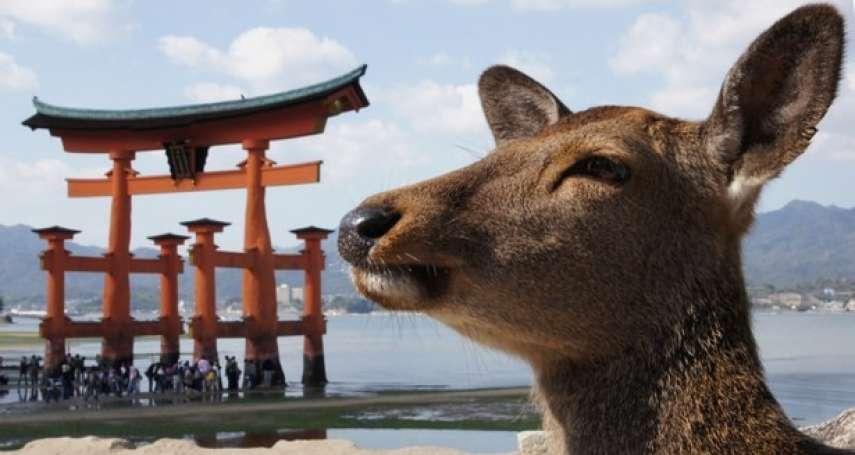關於廣島大小事》日本網友流傳,情侶去宮島會分手,背後原因真讓女人傻眼…