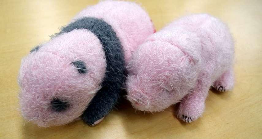 剛出生的貓熊香香造型玩偶 人氣熱賣理由是?