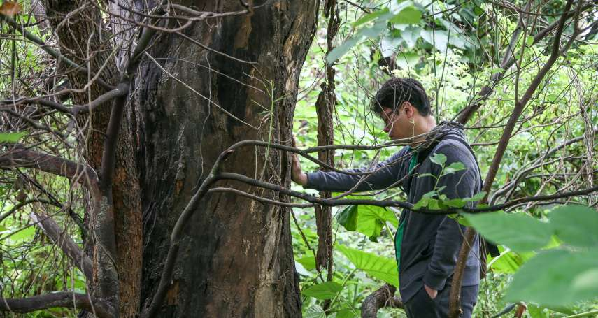 獨家專訪》輕撫死亡老樟樹落下男兒淚…「護樹志工」游藝今宣布參選北市議員
