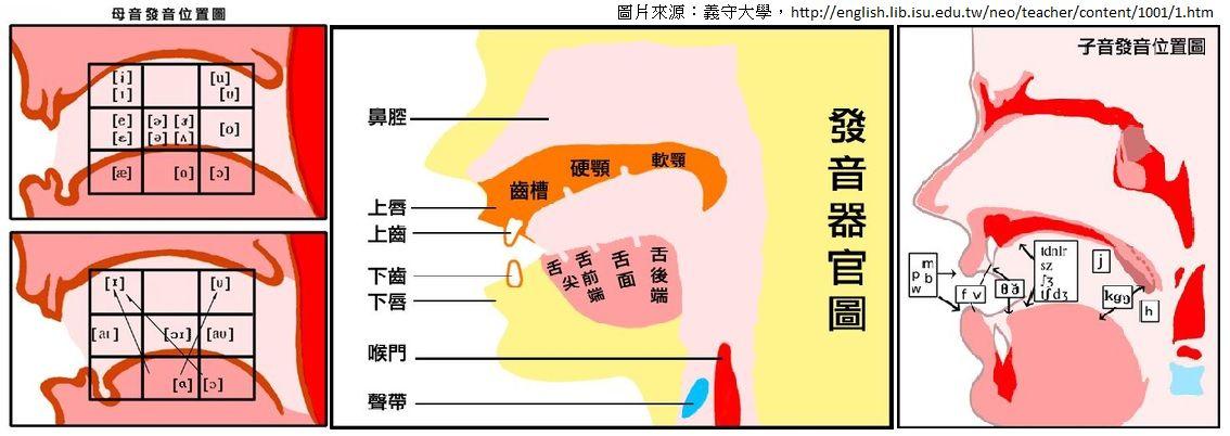 學習KK音標時,很多老師都會使用類似的口腔圖表。