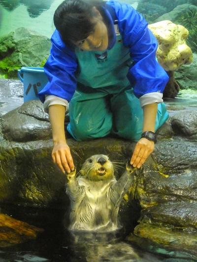 大阪海游館的水中生物超可愛。(圖/ muzina shanghai @Flickr)