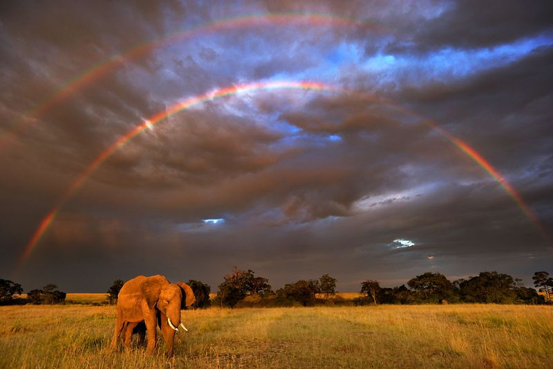 全球暖化引發的生物滅絕危機──非洲象