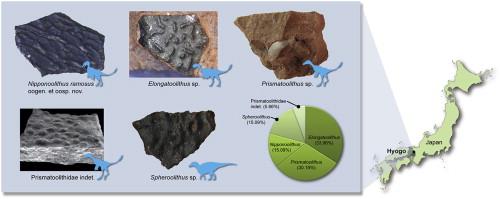 這次發現的5種恐龍蛋殼,下方中間就是新發現的恐龍蛋。