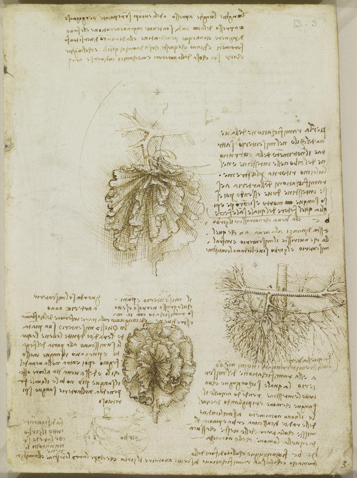 達文西筆記:腸繫膜、腸子和其血液供應(圖/royalcollection.org)