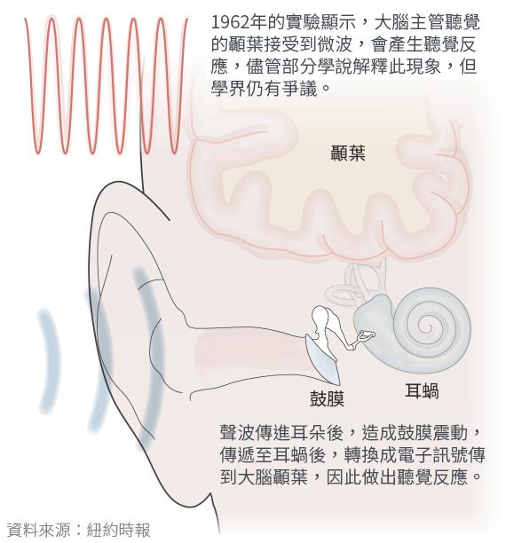 美國外交館疑似遭到微波攻擊,根據佛雷效應解釋,微波會讓腦部顳葉自行做出聽覺反應,就算沒有外物也會聽見聲響(風傳媒製圖)