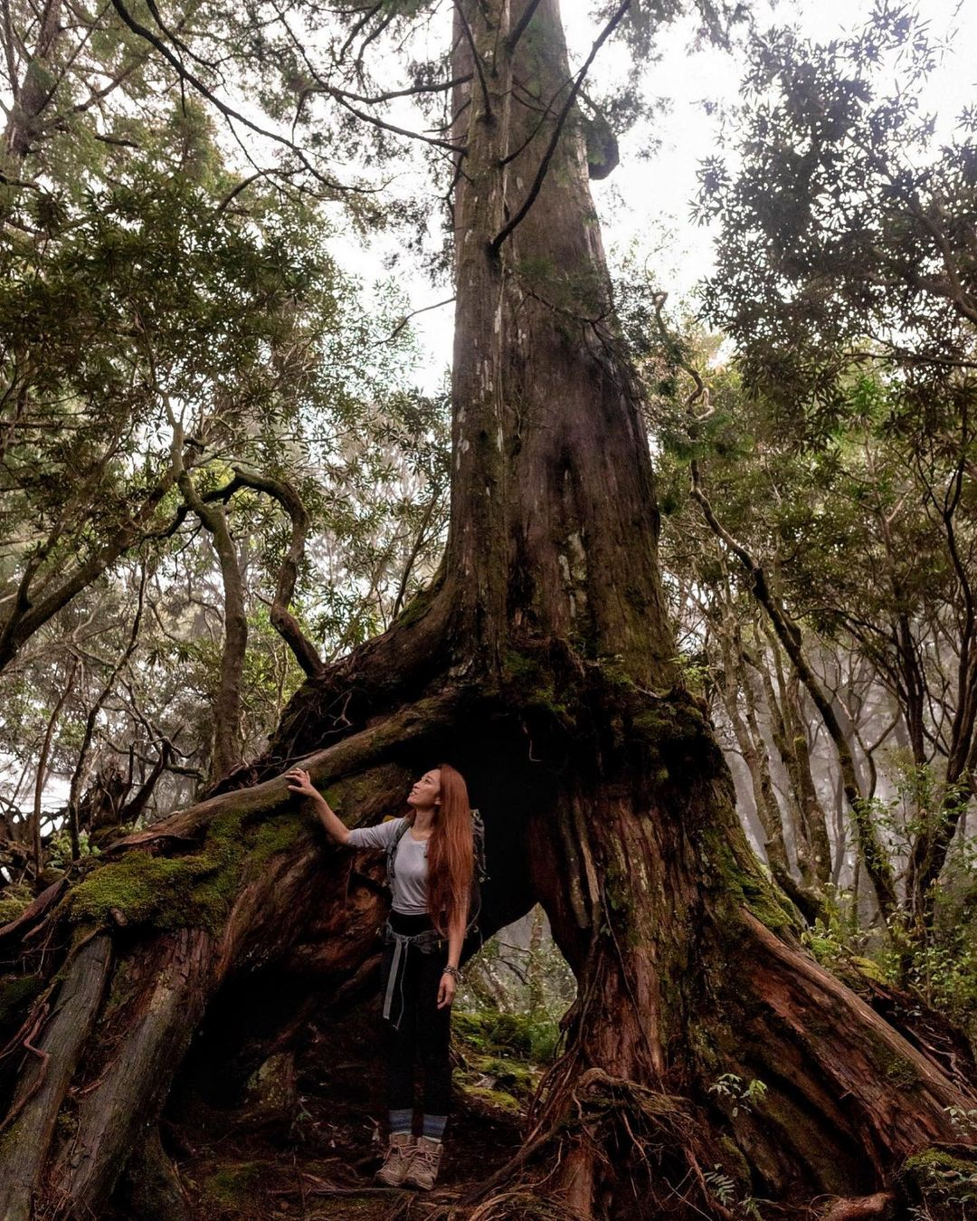 塔曼山魔幻森林步道-台版阿凡達秘境。 (圖/joanne.lii, Instagram)
