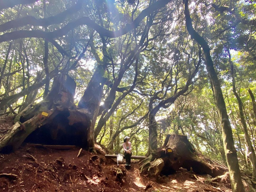 塔曼山登山步道沿途景色。 (圖/mamalala, Instagram)