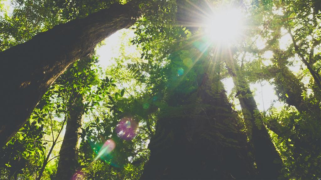 塔曼山魔幻森林步道景色。 (圖/Tripbaa趣吧!自由行專家)