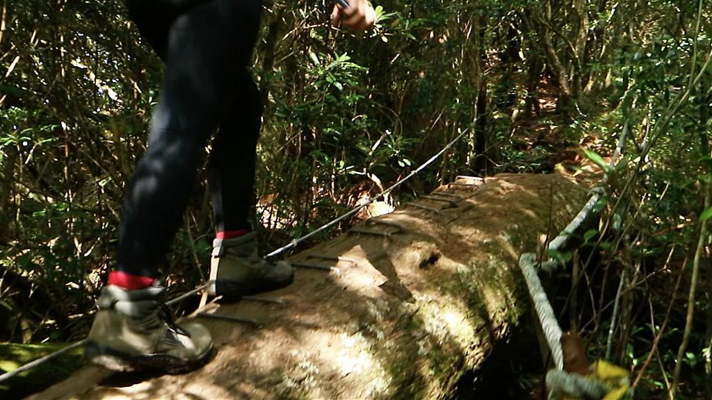 塔曼山魔幻森林步道。 (圖/Tripbaa趣吧!自由行專家)