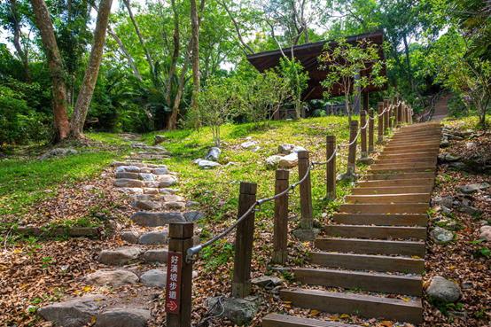 知本國家森林遊樂區好漢坡步道 (圖/行政院臺東林管處提供)