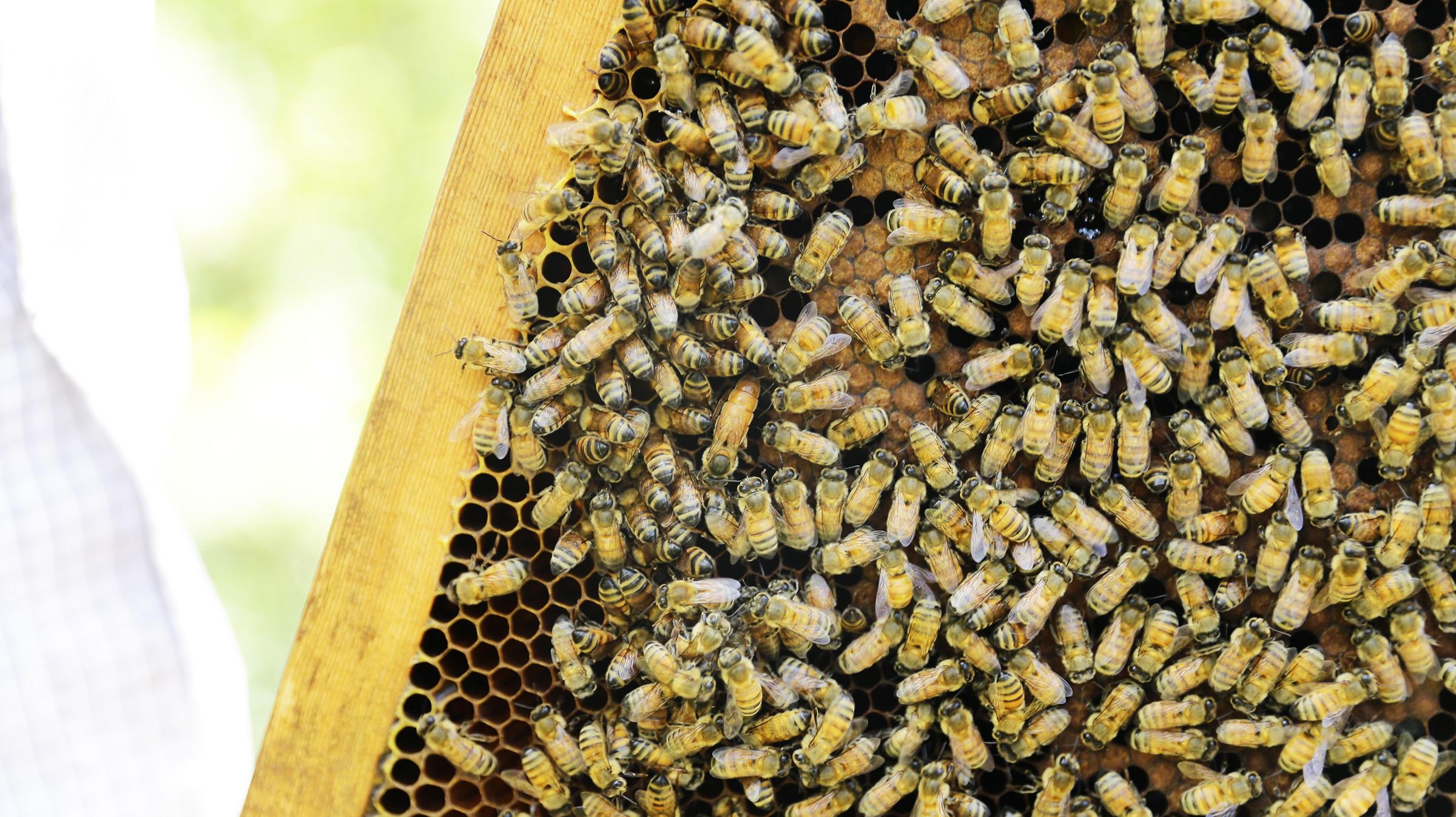 蜂樺蜂蜜每年固定做安心認證,保證推出的每款商品皆為百分百無添加、無農藥殘留,是優質的無毒蜂蜜。(圖/蜂樺蜂蜜提供)