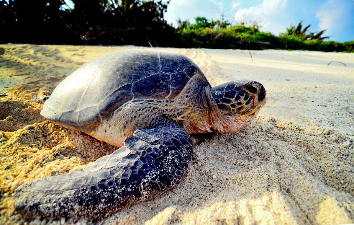 綠蠵龜產卵時的眼淚令他深深震撼!海巡分隊長用鏡頭記錄人類造成的生態悲歌…