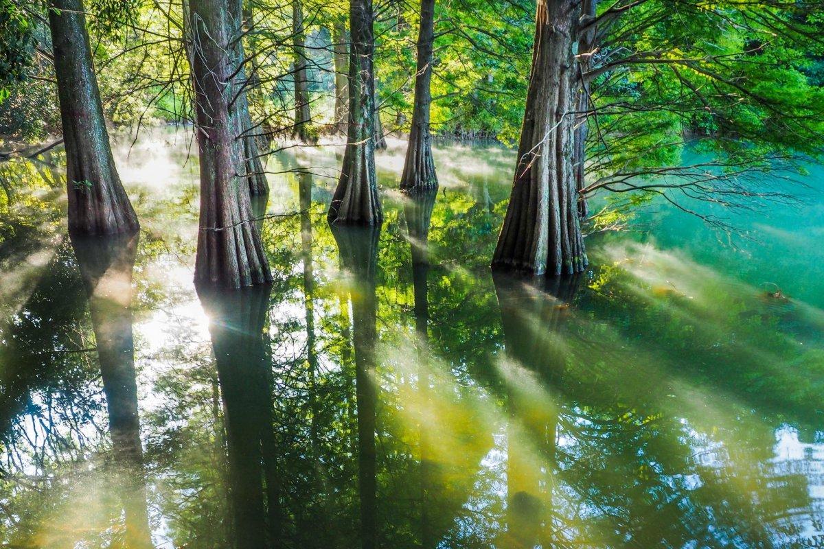 《魔法公主》的森林找到了!日本今夏最紅的景點「九大之森」,去九州絕對要排入行程!