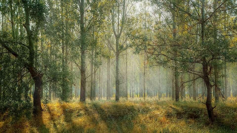 化身森林系少女,漫遊山林步道,這5處山林美景令人直呼實在「太美了」!