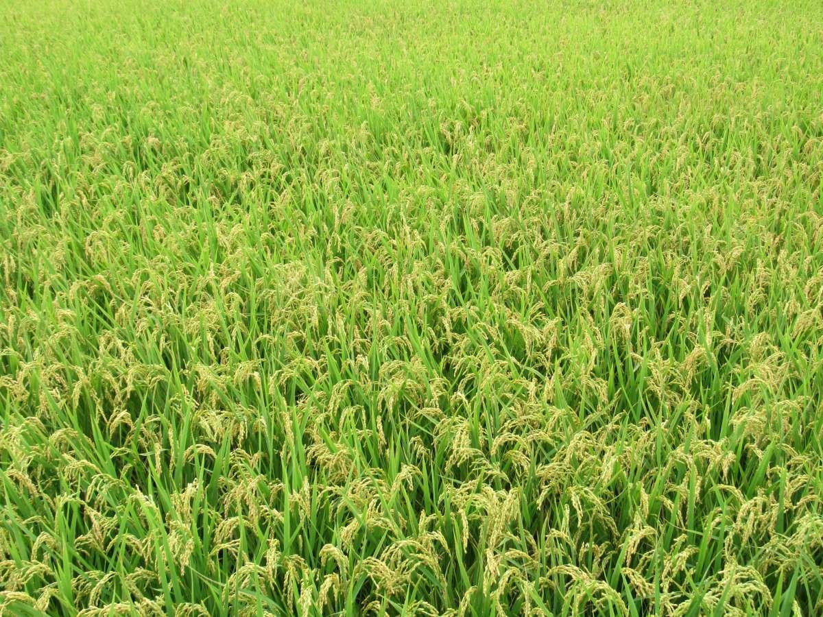 《有機農業促進法》施行 有機風正在蔓延
