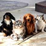 養貓比養狗聰明?寵物透露你的真實性格