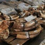 BBC製作人致信習近平拯救非洲大象