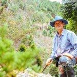 耗費30年20億元,「台灣樹王」的願望:巨木成林、人們安居