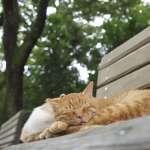 抗議無用 京都市通過禁餵流浪貓條例