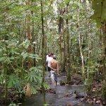 陳昱奉觀點:森林的美好 在於看不見的地方