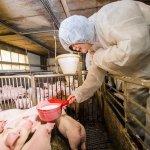 觀點投書:從小英訪雲林快樂豬、看農業品牌行銷