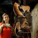 餐廳有老鼠!先別檢舉,因為牠們是專程來陪你吃飯的
