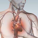 心臟可以修補!澳洲科學家成功讓心肌再生