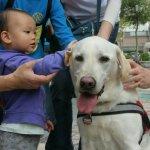 公家機關反對導盲犬入內,訓練師的一席話讓公務員慚愧