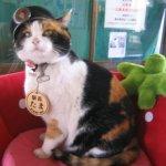 讓和歌山1年多賺11億!貓站長小玉歡度16歲大壽