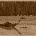 糾纏80年的不解之謎,Google下水獵捕尼斯湖水怪