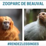 法動物園失竊 17隻珍稀金銀狨猴被偷