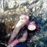 「俄」熊攻擊人 以樹葉泥土掩埋