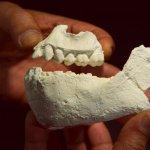 考古發現挑戰露西 誰才是「人類之母」?