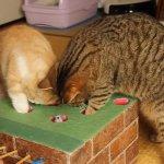 2小時完成豪華貓玩具!什麼樣的遊戲機台讓貓咪也瘋狂?