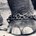 2分鐘看清自然的壯闊與殘忍!保育區對動物究竟是福是禍?