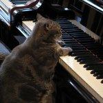 7首貓音樂,這幾個不尋常的音符原來是貓咪走在鍵盤上!