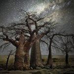 她用14年走遍世界,拍攝浩瀚星空下的古代樹