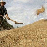 中國將向俄羅斯租用西伯利亞農業用地