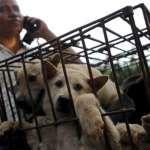 中國廣西玉林狗肉節在強烈反對聲中進行