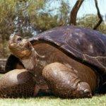 加州動物園高齡加拉帕戈斯巨龜被安樂死