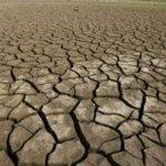 地球步入「大滅絕時期」:人類首當其衝
