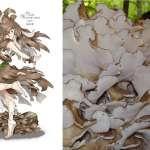 擬人化超美萌「菇」娘,這是我們平常看到的菇嗎?