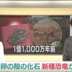 距今1.1億年 日本發現世界最小恐龍蛋殼化石