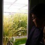 呂政璋觀點:WOW!綠色黃金之植物工廠