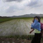 北韓大旱 聯合國警告兒童陷入健康危機