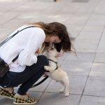 跟狗狗視訊,牠們認得出螢幕中的你嗎?