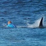 鯊口逃生非難事 專家教你如何逃離鯊魚攻擊