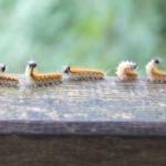漢字偵查課:蟲蟲來了,救命─「救」的字源史